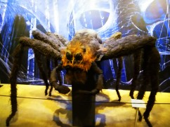 Harry Potter spider